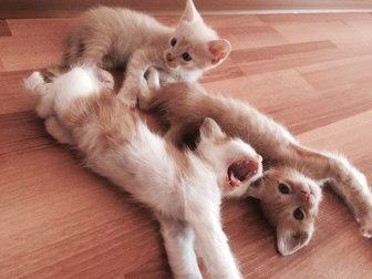 Свежее фотографию  Отдам котят в хорошие руки 36971896 в Уфе