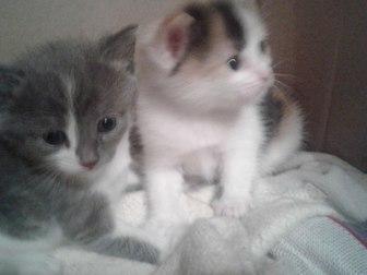 Уникальное фото Отдам даром - приму в дар отдам в дар котят 37764811 в Уфе