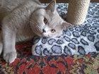 Уникальное foto Вязка Ищем кошку для британского кота 11 мес, 33866433 в Улан-Удэ