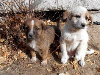 Увидеть foto  Щенки от крупной собаки Белка и Стрелка ищут дом 33778100 в Улан-Удэ