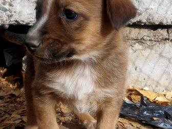 Смотреть изображение  Щенки от крупной собаки Белка и Стрелка ищут дом 33778100 в Улан-Удэ