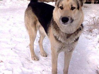 Смотреть foto  Щенки девочки от большой собаки в добрые руки 34301298 в Улан-Удэ