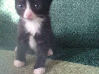 Скачать бесплатно изображение  отдам котят даром 34592237 в Улан-Удэ