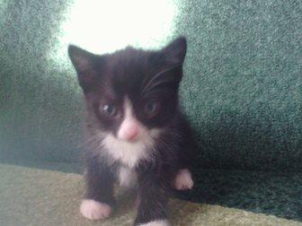 Смотреть фотографию  отдам котят даром 34592237 в Улан-Удэ