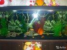 Фото в Рыбки (Аквариумистика) Аквариумные рыбки продам аквариум, прямоугольный 300литров, в Ульяновске 0