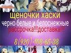 Сибирский хаски фото в Ульяновске