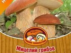 Фото в Домашние животные Растения Продам мицелий белых грибов (на субстрате)/50 в Усть-Илимске 100