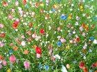 Фото в Домашние животные Растения Цена за упаковку 300 гр.   Газон-сидерат в Усть-Илимске 445