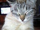 Уникальное foto Потерянные пропал кот 33605582 в Вятских Полянах