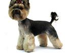 Изображение в Собаки и щенки Стрижка собак Стрижка кошек и собак с выездом на дом. в Владимире 600
