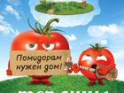 Скачать бесплатно изображение  Теплицы для томатов Гороховец 38579102 в Гороховце