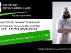 Новое фото  Скорая дезинфекция (СЭС) Дезинфекция, дезинсекция, дератизация, 38929176 в Владимире