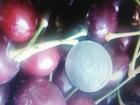 Скачать бесплатно фотографию Абрикосы Продаю абрикосы и черешню свежего урожая, 66800146 в Владимире
