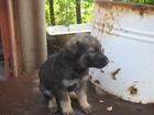 Фото в Собаки и щенки Продажа собак, щенков Отдам щенков в добрые руки. Помогите спасти в Волгограде 0