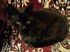 Скачать бесплатно фотографию Отдам даром Отдам в добрые руки котят 37300889 в Волгограде