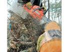 Фото в   Спил деревьев, обрезка деревьев, корчевка в Волгограде 100