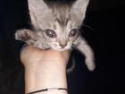Новое фото  Отдам даром в добрые руки котенка 70540942 в Волгограде