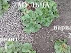 Уникальное изображение Ландшафтный дизайн Мульча (гранулы из лузги) 74174410 в Волгограде