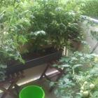 получите урожай или создайте красивый цветущий кусочек лета на окне и балконе