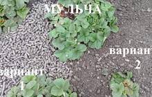 Мульча (гранулы из лузги)