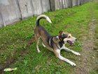 Фотография в   Пропал пёс по имени Малыш 20. 06. 15. Телефон в Вологде 0