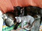 Изображение в  Отдам даром - приму в дар Очень красивые котята! 2 девочки и 2 мальчика! в Волжском 0