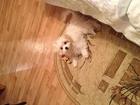 Свежее фотографию  Пропала болонка щенок 38844593 в Волжском