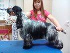 Уникальное фотографию Выставки собак Английского кокер спаниеля щенки 32406775 в Воронеже
