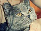 Скачать бесплатно фото Потерянные 22 апреля 2015 года в районе ул, Димитрова 2а пропала кошка, Окрас серый, глаза желтого цвета, откликается на кличку лиза, кто знает просьба сообщить в долгу 32699633 в Воронеже