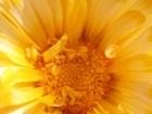 Фотография в Домашние животные Растения Недорого семена клещевины, циннии махровой, в Воронеже 0