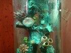 Скачать фото Аквариумы Оригинальный аквариум marvelous aqva на 150 л 42696666 в Воронеже