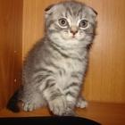 Милыйе котята