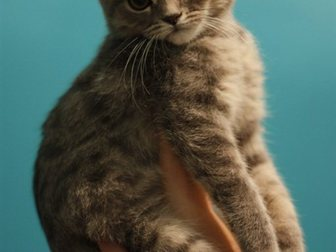 Просмотреть изображение Отдам даром Милый котенок 33661188 в Воронеже
