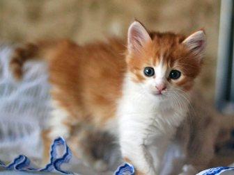 Скачать фото Отдам даром котята 33771363 в Воронеже