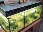 Скачать foto Аквариумные рыбки Три аквариума по 50 литров 51136684 в ВышнемВолочке
