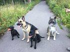 Изображение в Домашние животные Услуги для животных Дрессировка, воспитание. Городская собака, в Зеленограде 1000