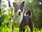 Смотреть фотографию Продажа собак, щенков Молодая красавица в дар 38540640 в Зеленограде
