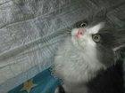 Просмотреть foto Отдам даром - приму в дар котенок в добрые руки 39232514 в Зеленограде