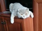 Увидеть foto Вязка кошек Кот вислоухий молодой ищет кошку 40182490 в Зеленограде