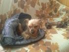 Уникальное фотографию Услуги для животных Передержка собак в домашних условиях, 68106901 в Зеленограде