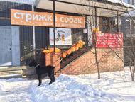 Зоосалон Гав и Мяу Cалон для собак и кошек «ГАВ и МЯУ» это второй салон, а значи