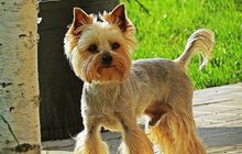 стрижка собак в Зеленограде